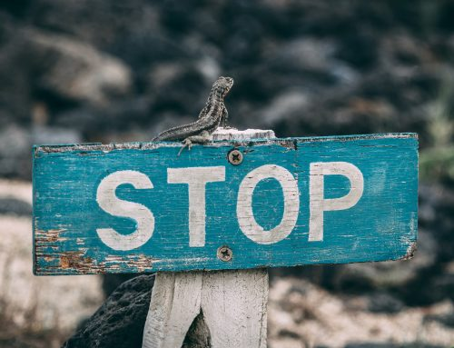 How to slow down the growth of your business